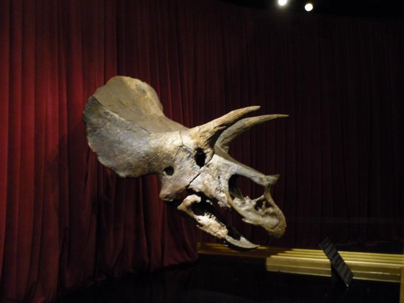 No podía faltar un dinosaurio...el Tryceratops!