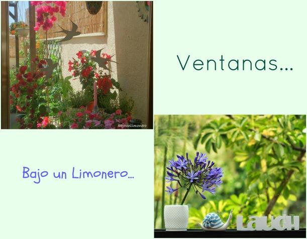 limonero4